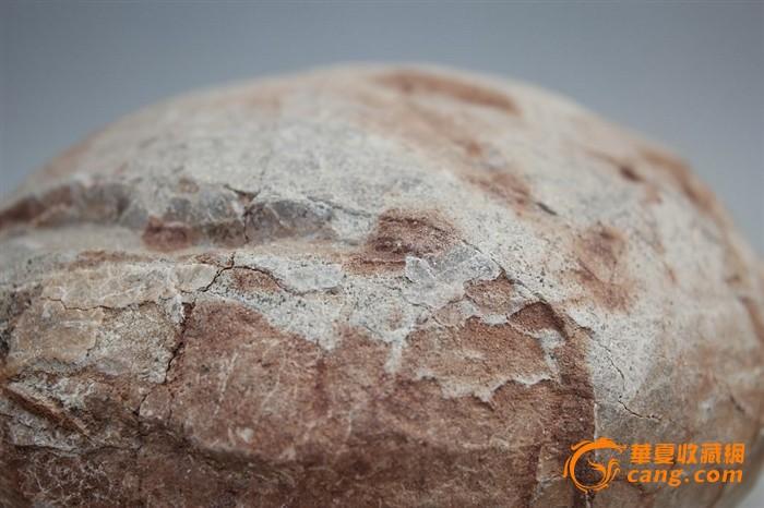 法国恐龙蛋化石_高古出土一恐龙蛋化石